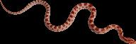 Snake PNG Free Download 4