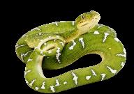 Snake PNG Free Download 7