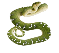 Snake PNG Free Download 8