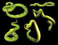 Snake PNG Free Download 9