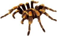 Spider PNG Free Download 15