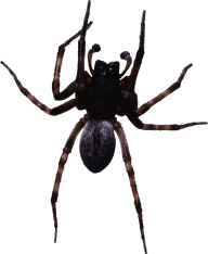 Spider PNG Free Download 4