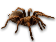 Spider PNG Free Download 5