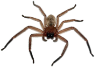 Spider PNG Free Download 9