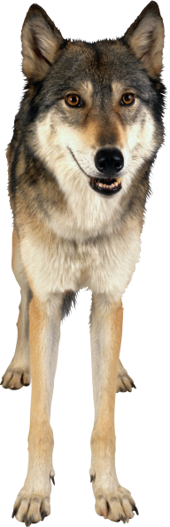 standedwolf free png download