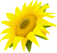 Sunflower PNG Free Download 10