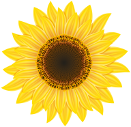 Sunflower PNG Free Download 19