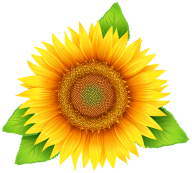Sunflower PNG Free Download 20