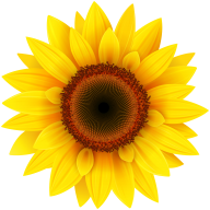 Sunflower PNG Free Download 21