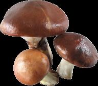 super 3 mushroom free download png
