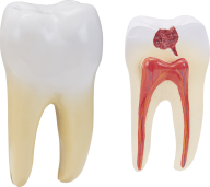 Teeth PNG Free Download 2