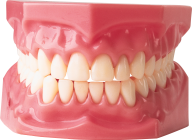 Teeth PNG Free Download 7