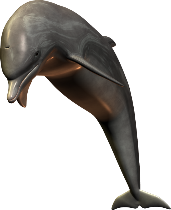 3D Dolphin Png