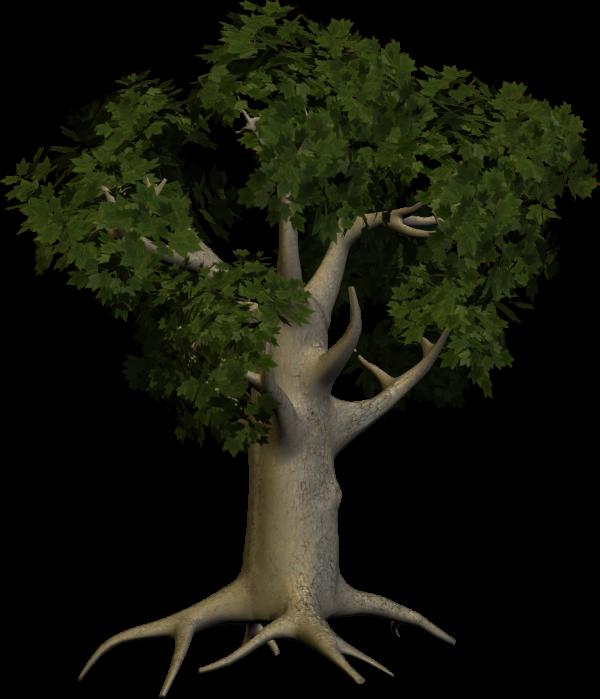 3D Papaya Tree Png
