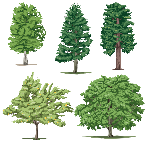 5 Different Trees Png