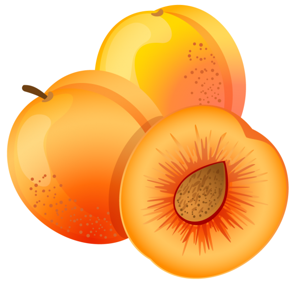 Apricot Drawn Clipart