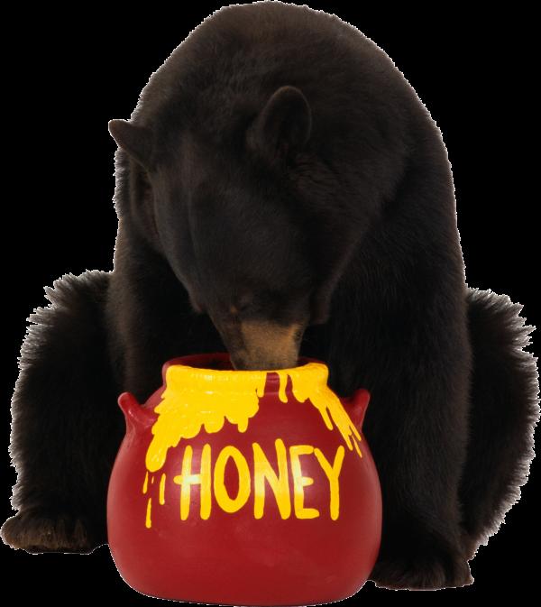 Bear Eating Honey Png Image