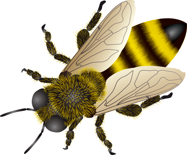 bee clipart png