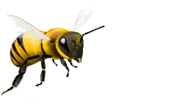bee png free
