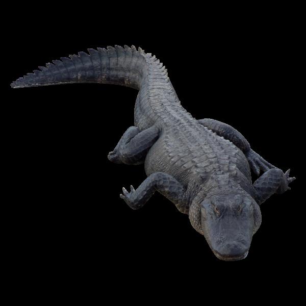 Black Crocodile Png