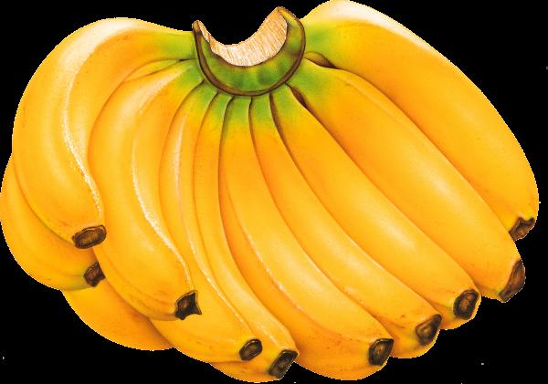 bunch banana png
