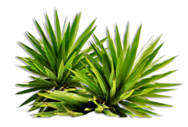 Bush Png Free Image Download 19 Png Images Download Bush Png Free Image Download 19 Pictures Download Bush Png Free Image Download 19 Png Vector Stock Images Free Png Download Bushes free download png resolution: free png download