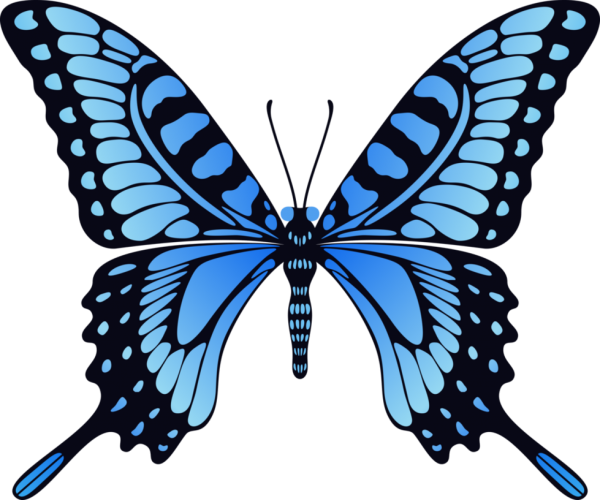 Butterfly Png Blue