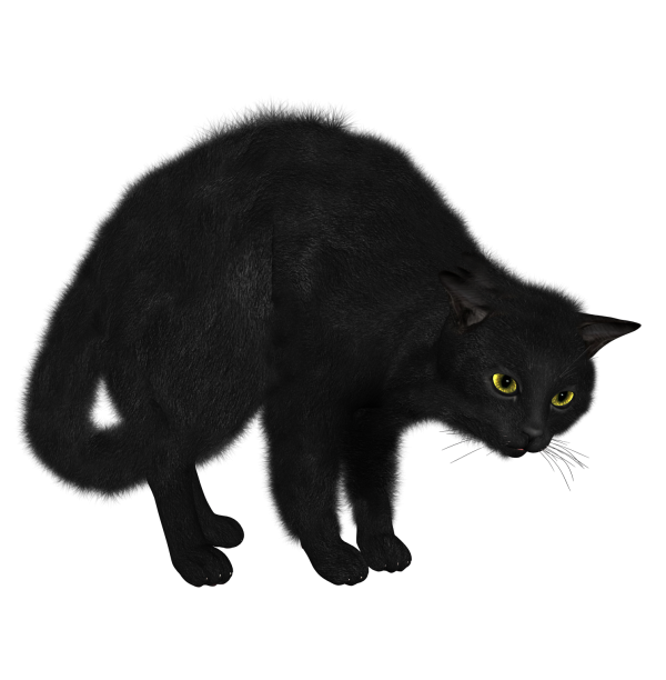 Cat Afraid Png