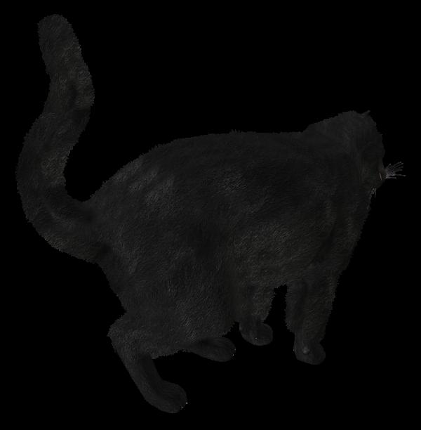 Cat Back Side Png