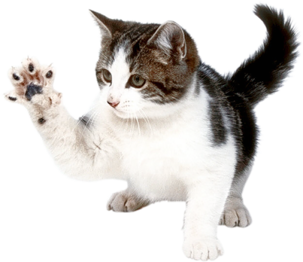 Cat Hand Png