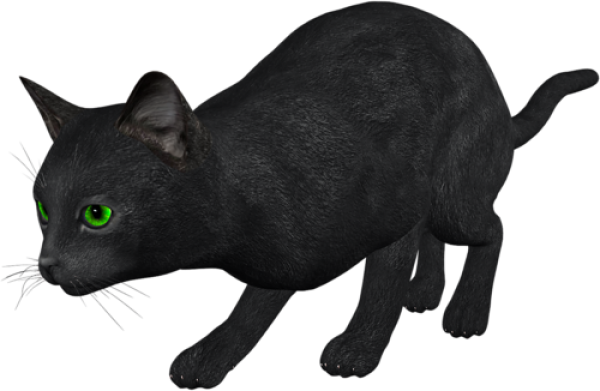 Cat Hunting Png