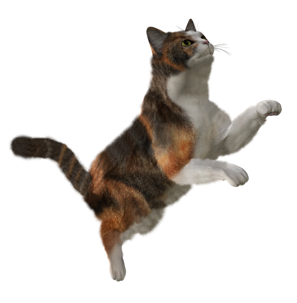 Cat Jumping Png