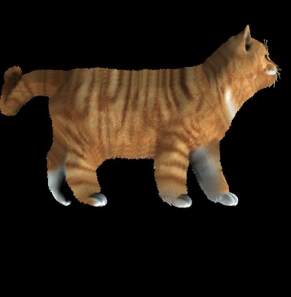 Cat Logo Png