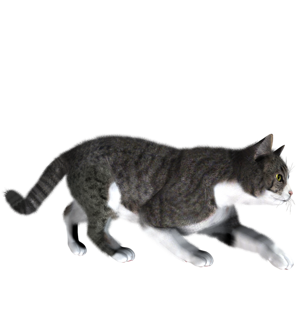 Cat Looking For Meal png