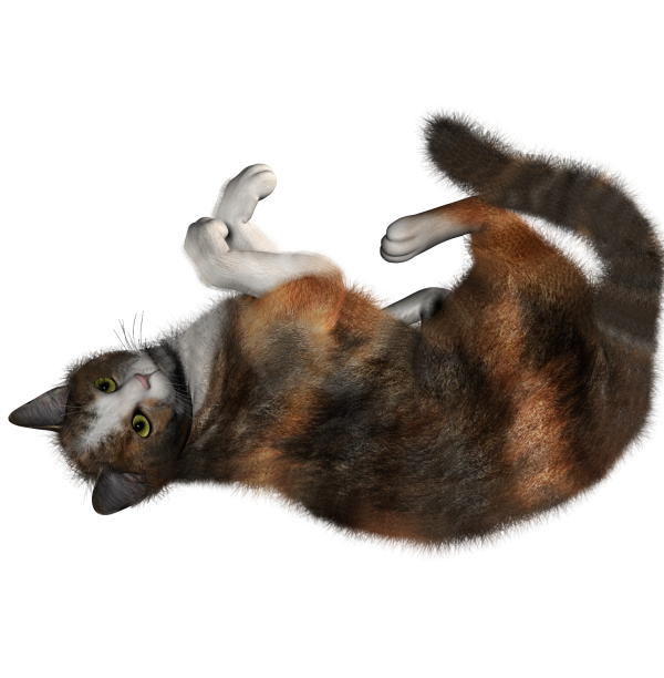Cat Rolling Png