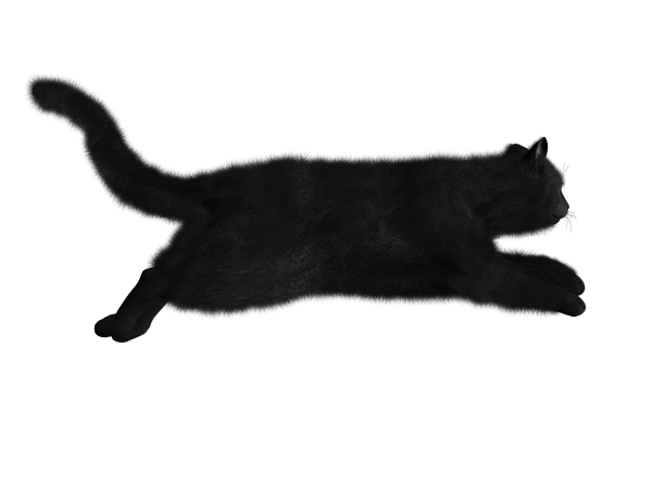 Cat Running Png