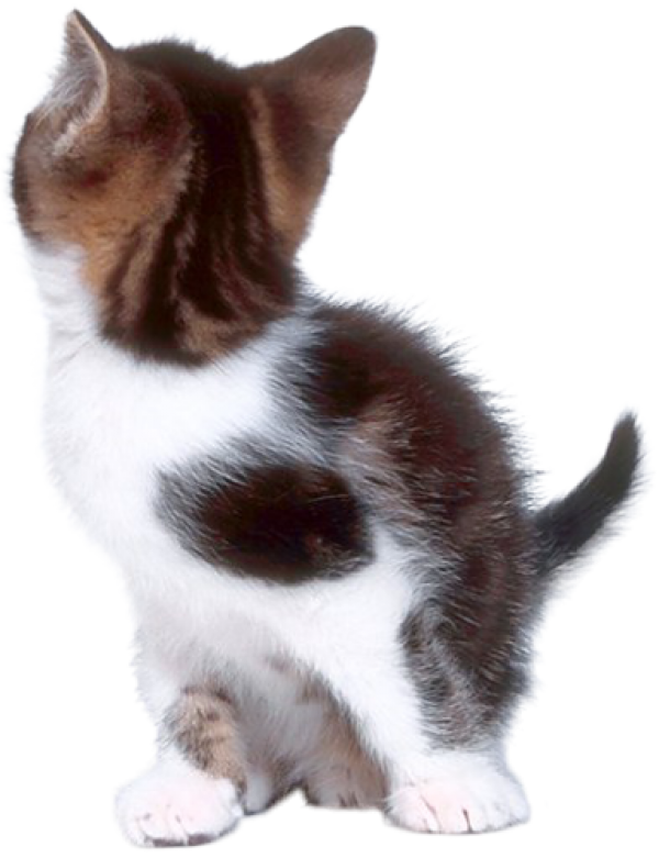 Cat Turned Png