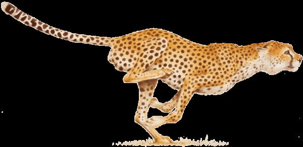 Cheetah Fast Running Png