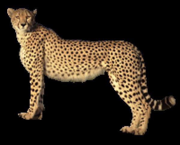 Cheetah for logo png