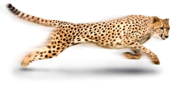 Cheetah Icon Png