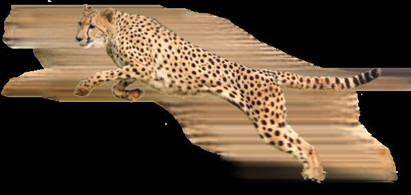 Cheetah Jaquar Logo Png
