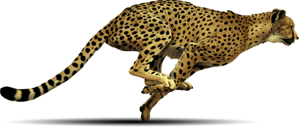 Cheetah Png HD