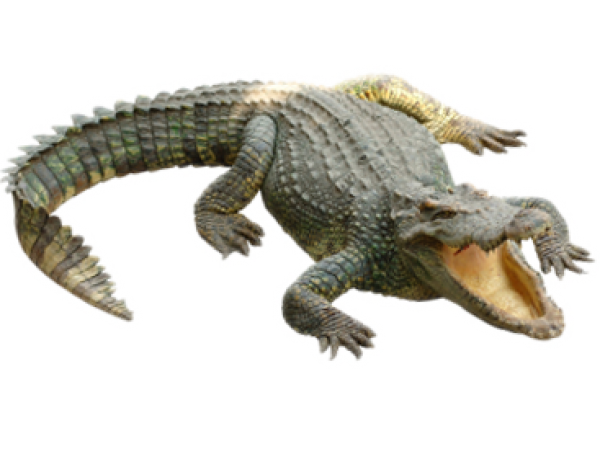 Crocodile Clipart Png