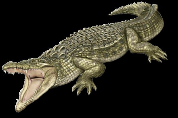Crocodile Png Logo