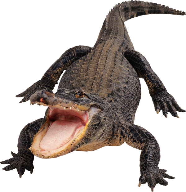 Crocodile Png opening Mouth