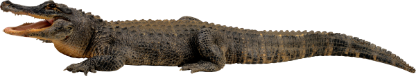 Crocodile Png Side View