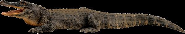 Crocodile Png Side View