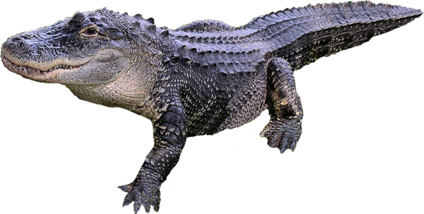 Crocodile Side View Png