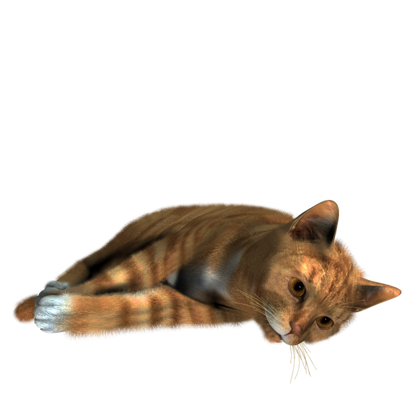 Cute Cat Sleeping Png