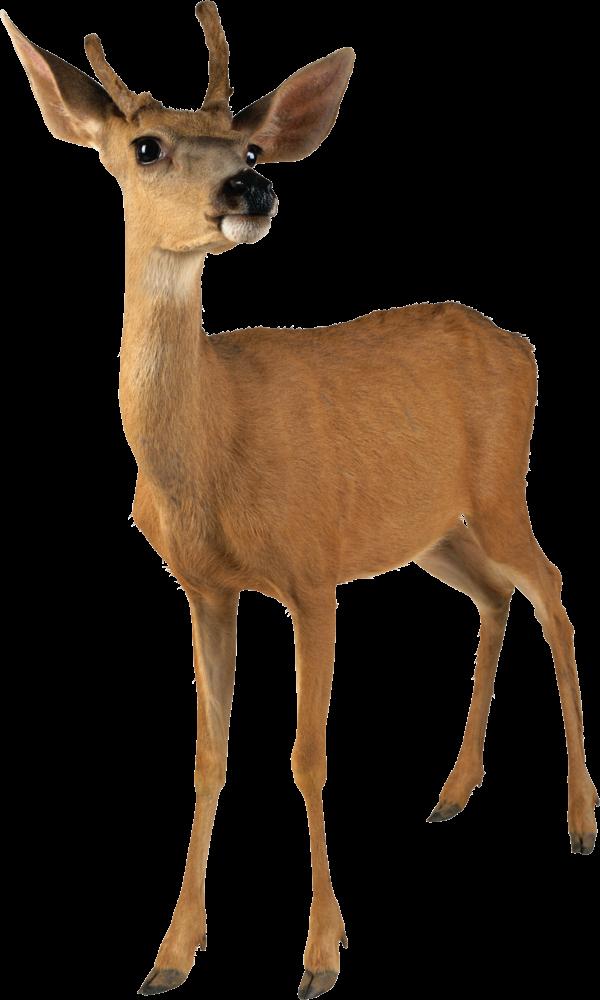 Deer Doll Png
